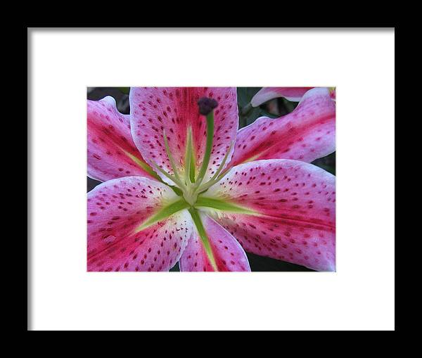 Flower Framed Print featuring the photograph Attractiveness Photography by Tina Marie