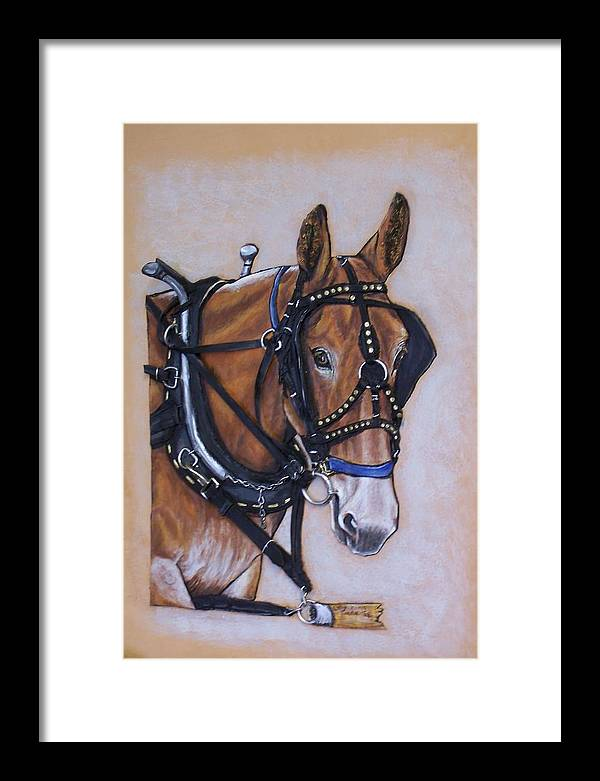 Horses Framed Print featuring the painting Augustus by Lilly King