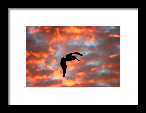 Wa Framed Print featuring the photograph Australian Pelican Silhouette by Tony Brown