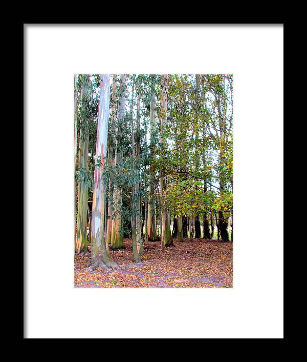 Trees Framed Print featuring the photograph Autume Time. by Joyce Woodhouse