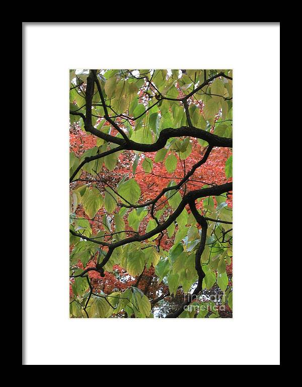 Fall Framed Print featuring the photograph Autumn 7 by Carol Groenen