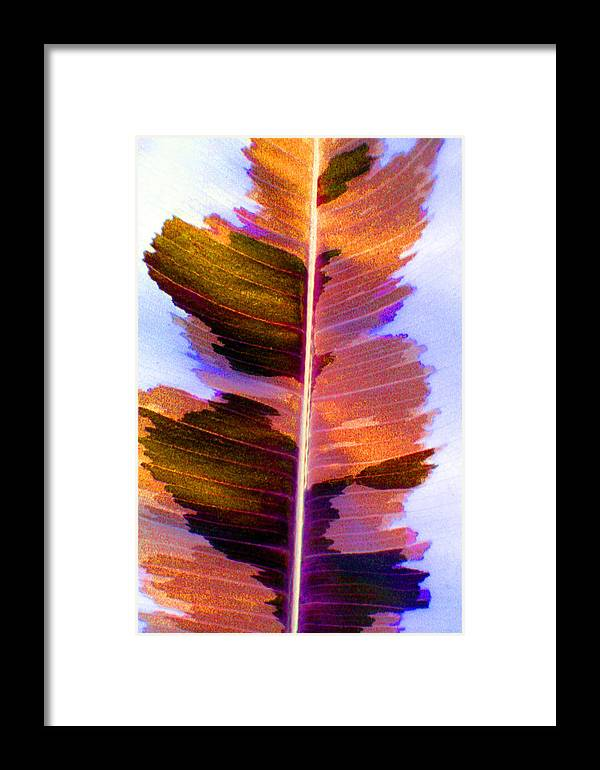 Pink Framed Print featuring the photograph Autumn Abstract by Carolyn Stagger Cokley