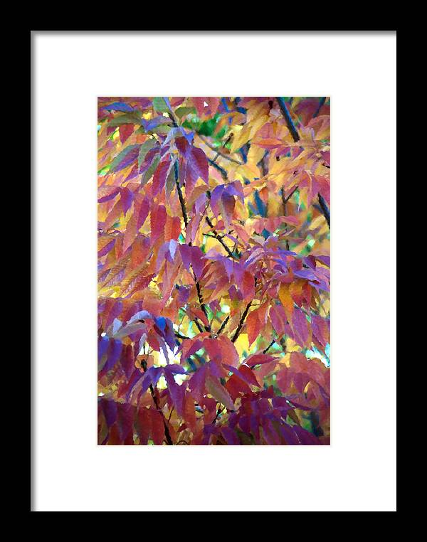 Ash Tree Framed Print featuring the photograph Autumn Ash Tree 1 by Steve Ohlsen