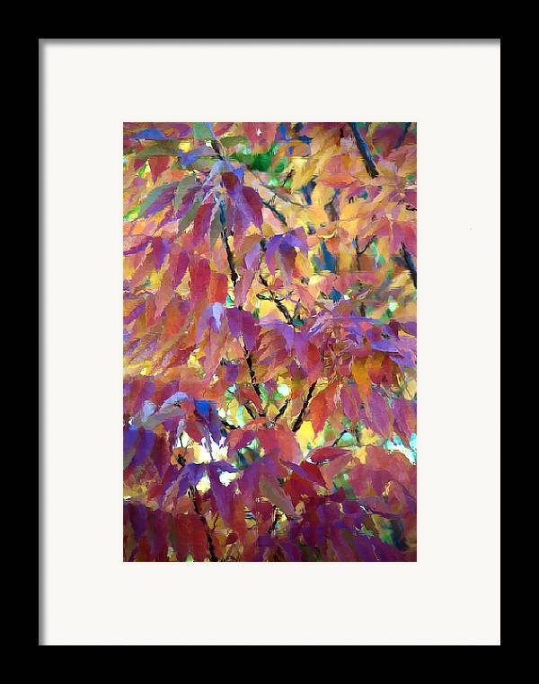 Ash Tree Framed Print featuring the photograph Autumn Ash Tree 3 by Steve Ohlsen