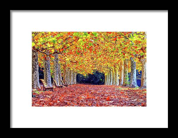 Autumn Framed Print featuring the photograph Autumn At Shinjuku Park by Budi Nur Mukmin