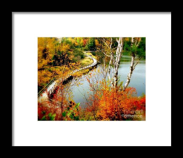 Autumn Framed Print featuring the photograph Autumn Birch Lake Boardwalk by Patricia L Davidson