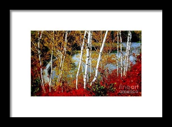 Autumn Framed Print featuring the photograph Autumn Birch Lake View by Patricia L Davidson