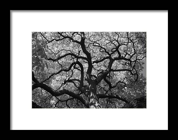 Tree Framed Print featuring the photograph Autumn Bloom by Sonja Anderson