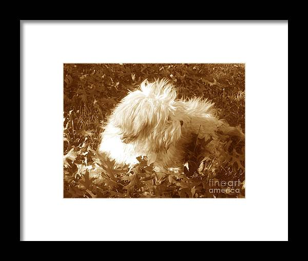 Dog Teddy Outdoors Leaves Fall Autumn Animals Framed Print featuring the photograph Autumn Breeze 2 by Reina Resto
