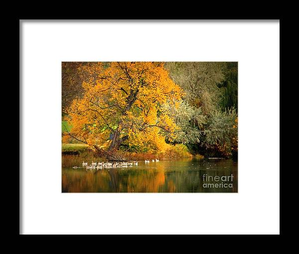 Fall Framed Print featuring the photograph Autumn Calm by Carol Groenen