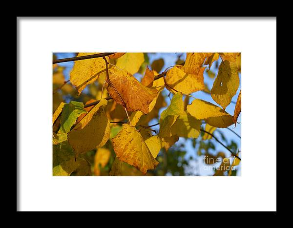 Autumn Framed Print featuring the photograph Autumn by Carol Lynch