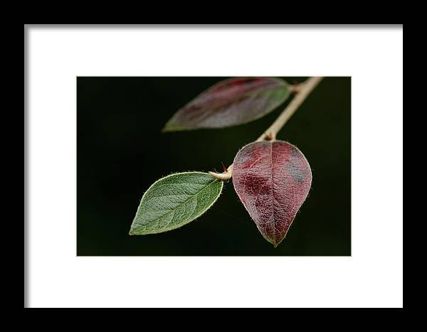 Fine Art Framed Print featuring the photograph Autumn Change by Photopoint Art