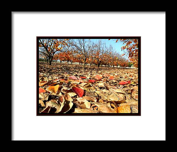 Autumn Framed Print featuring the photograph Autumn Colors 02 by Arik Baltinester