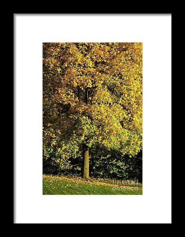 Nature Framed Print featuring the photograph Autumn Colors 8 by Rudi Prott