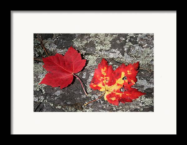 Tranquility Framed Print featuring the photograph Autumn Colors by Kate Leikin