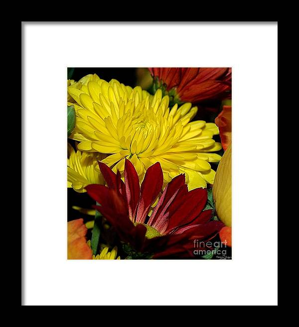 Chrysanthemum Photography Framed Print featuring the photograph Autumn Colors by Patricia Griffin Brett