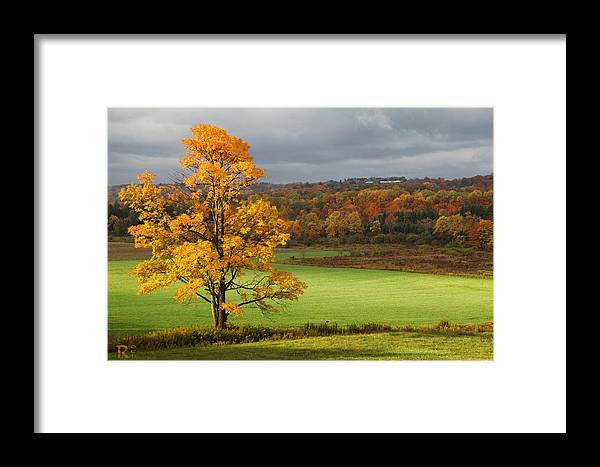 Autumn Framed Print featuring the photograph Autumn Colors by Robert Och