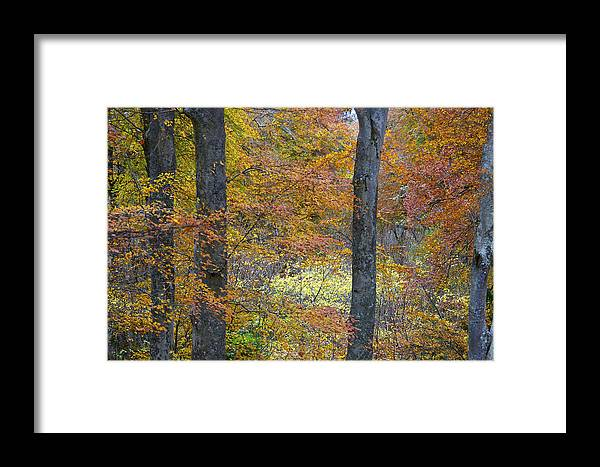 Fall Framed Print featuring the photograph Autumn Colours by Phil Crean