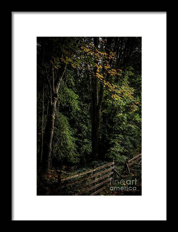 Autumn Framed Print featuring the photograph Autumn Fence by David Hillier