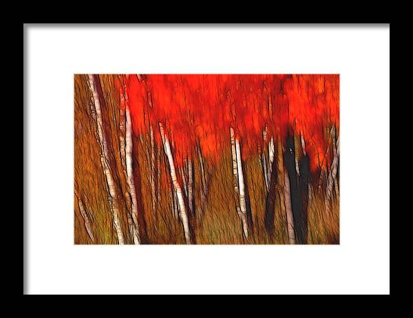 Trees Framed Print featuring the photograph Autumn Fire by Bill Morgenstern