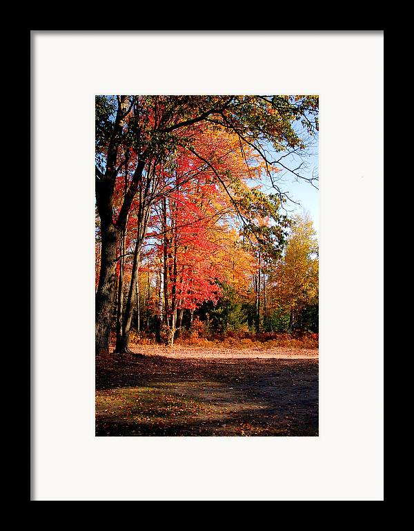 Trees Framed Print featuring the photograph Autumn Flame by Jennifer Englehardt