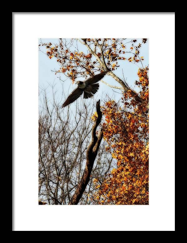 Flight Framed Print featuring the photograph Autumn Flight by Alan Skonieczny