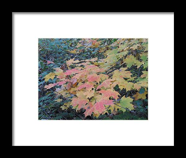 Nature Framed Print featuring the photograph Autumn Foliage by Ralph Baginski