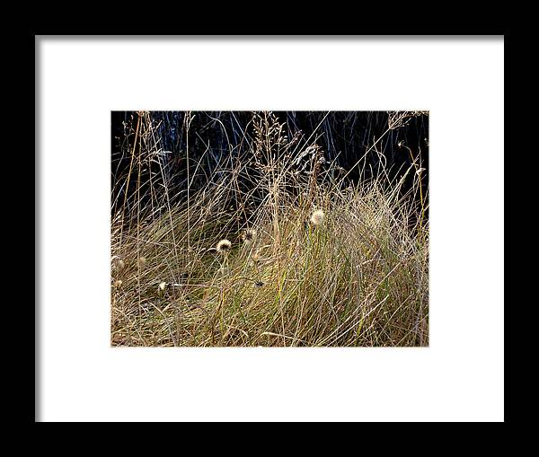 Natue Framed Print featuring the photograph Autumn Grass by Marilynne Bull