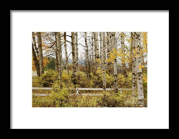 Grove Framed Print featuring the photograph Autumn Grove by Idaho Scenic Images Linda Lantzy