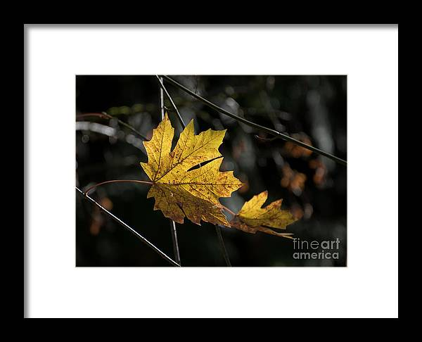 Framed Print featuring the photograph Autumn Highlight by MaryJane Armstrong