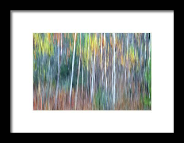 Forest Pastels Form An Autumn Impression Framed Print featuring the photograph Autumn Impression by Bill Morgenstern