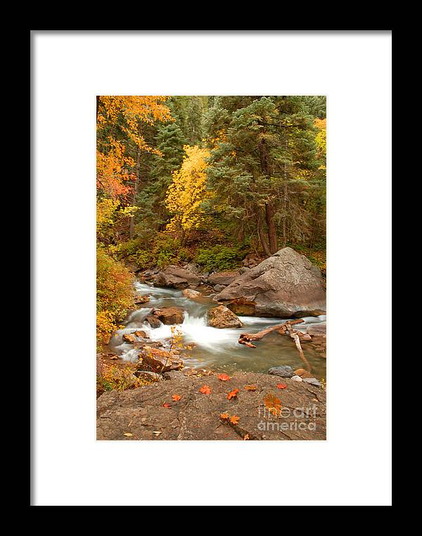 Autumn Framed Print featuring the photograph Autumn In Alpine Loop by Dennis Hammer