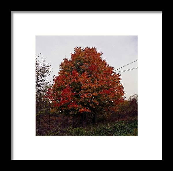 Foliage Framed Print featuring the photograph Autumn In Big Hill by George Ferrell