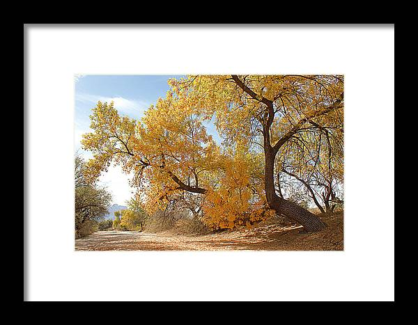 Autumn Framed Print featuring the photograph Autumn In Cdo Wash by Greg Taylor