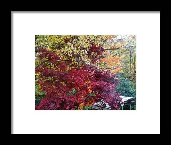Tree Framed Print featuring the photograph Autumn In October by Misty VanPool