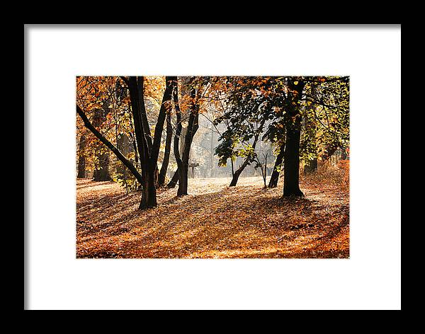 Morning Framed Print featuring the photograph Autumn In The Park by Andriy Zolotoiy
