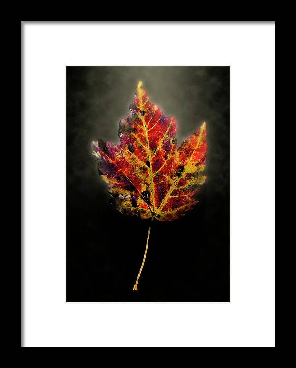 Leaf Framed Print featuring the photograph Autumn by Jim Painter