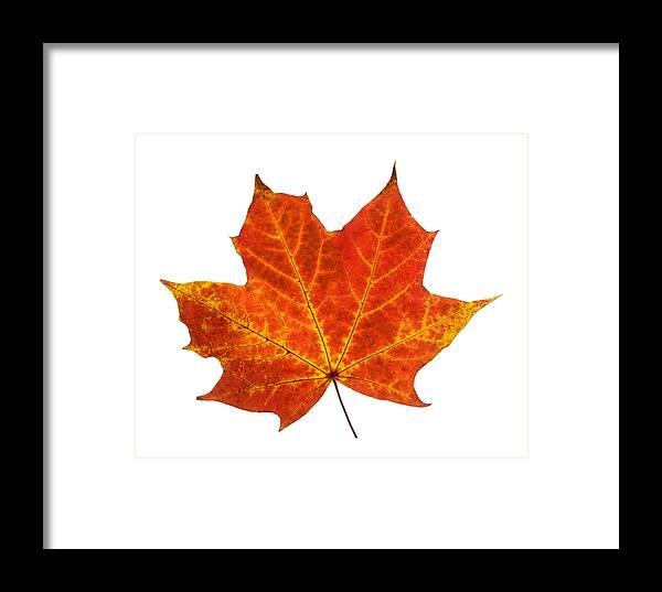 Single Autumn Leaf Framed Print featuring the photograph Autumn Leaf 3 by Gill Billington