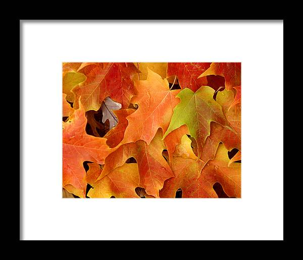 Leaf Framed Print featuring the photograph Autumn Leaves - Foliage by Dmitriy Margolin