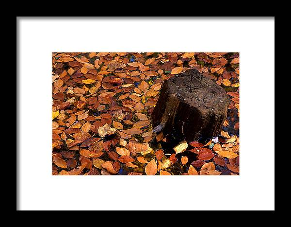 Autumn Framed Print featuring the photograph Autumn Leaves And Tree Stump by Barry Shaffer
