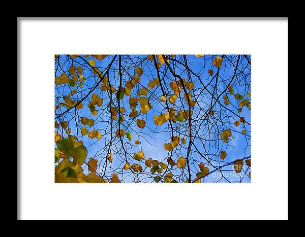 Autumn Framed Print featuring the photograph Autumn Leaves by Carol Lynch