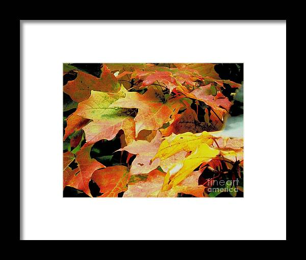 Autumn Framed Print featuring the photograph Autumn Leaves by Curtis Tilleraas