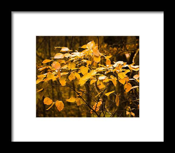 Fall Framed Print featuring the photograph Autumn Leaves by Ralph Steinhauer