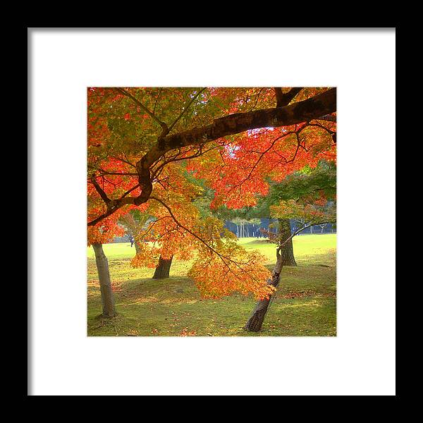 Leaves Framed Print featuring the photograph Autumn Leaves by Roberto Alamino
