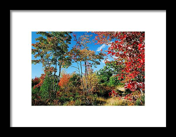 Maples Framed Print featuring the photograph Autumn Maples by Frank Townsley