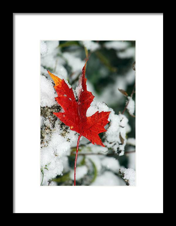 Autumn Framed Print featuring the photograph Autumn Meets Winter by Cathy Beharriell