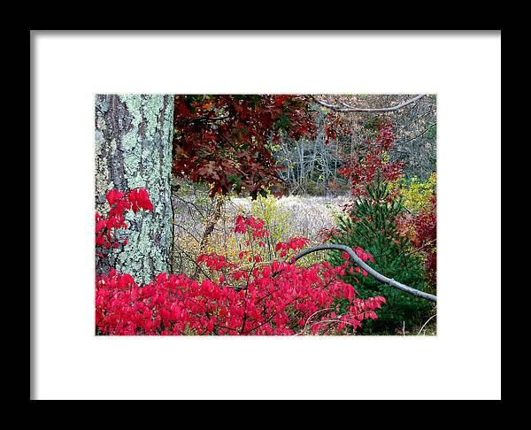 Trees Framed Print featuring the photograph Autumn Mixtures by Joni Moseng