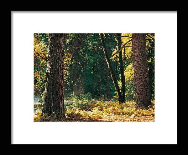 Landscape Framed Print featuring the photograph Autumn Morning Yosemite National Park by Edward Mendes