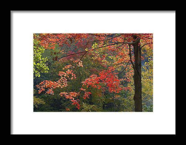 Foliage Framed Print featuring the photograph Autumn Palette by Neil Doren