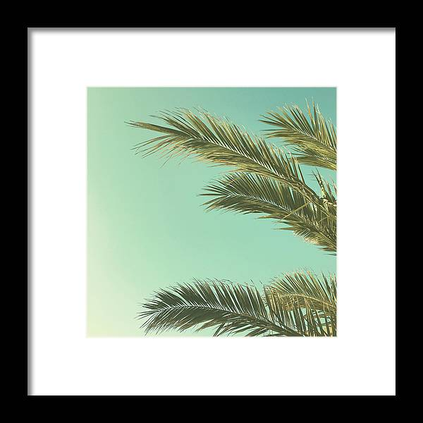 Palm Trees Framed Print featuring the photograph Autumn Palms II by Cassia Beck